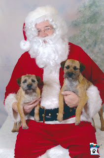 """""""WHY do they make us do things like this??""""Indy and Shea with SantaDec. 2011"""