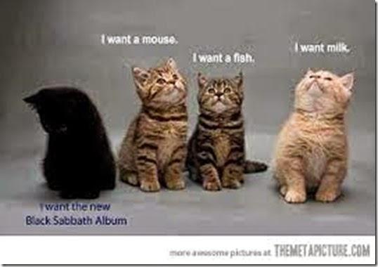 Heavy-Metal-gatos