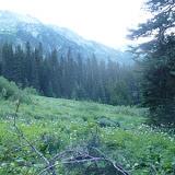 Meadow at Bear Camp