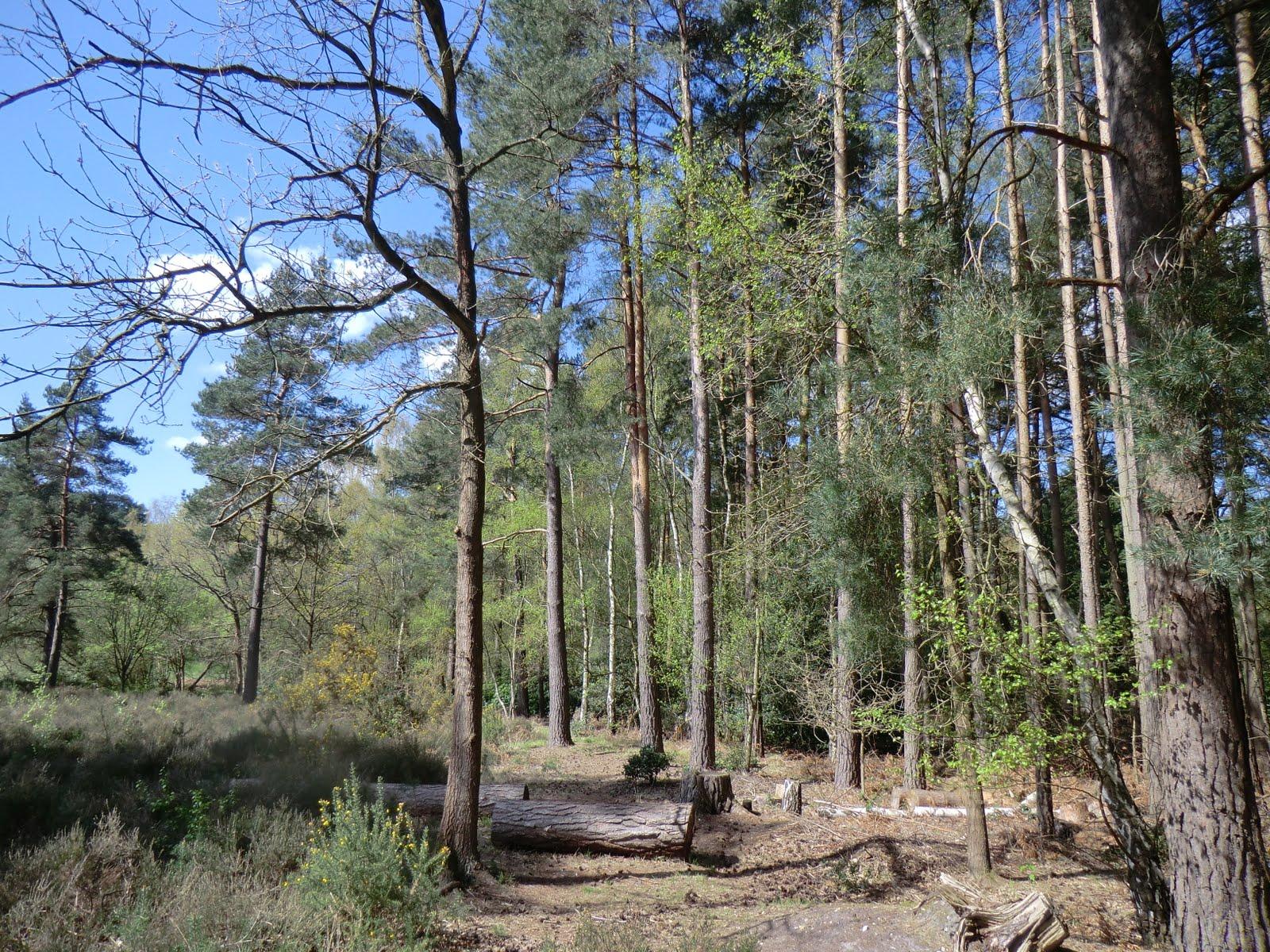 CIMG0451 Heathland near Heath Pond
