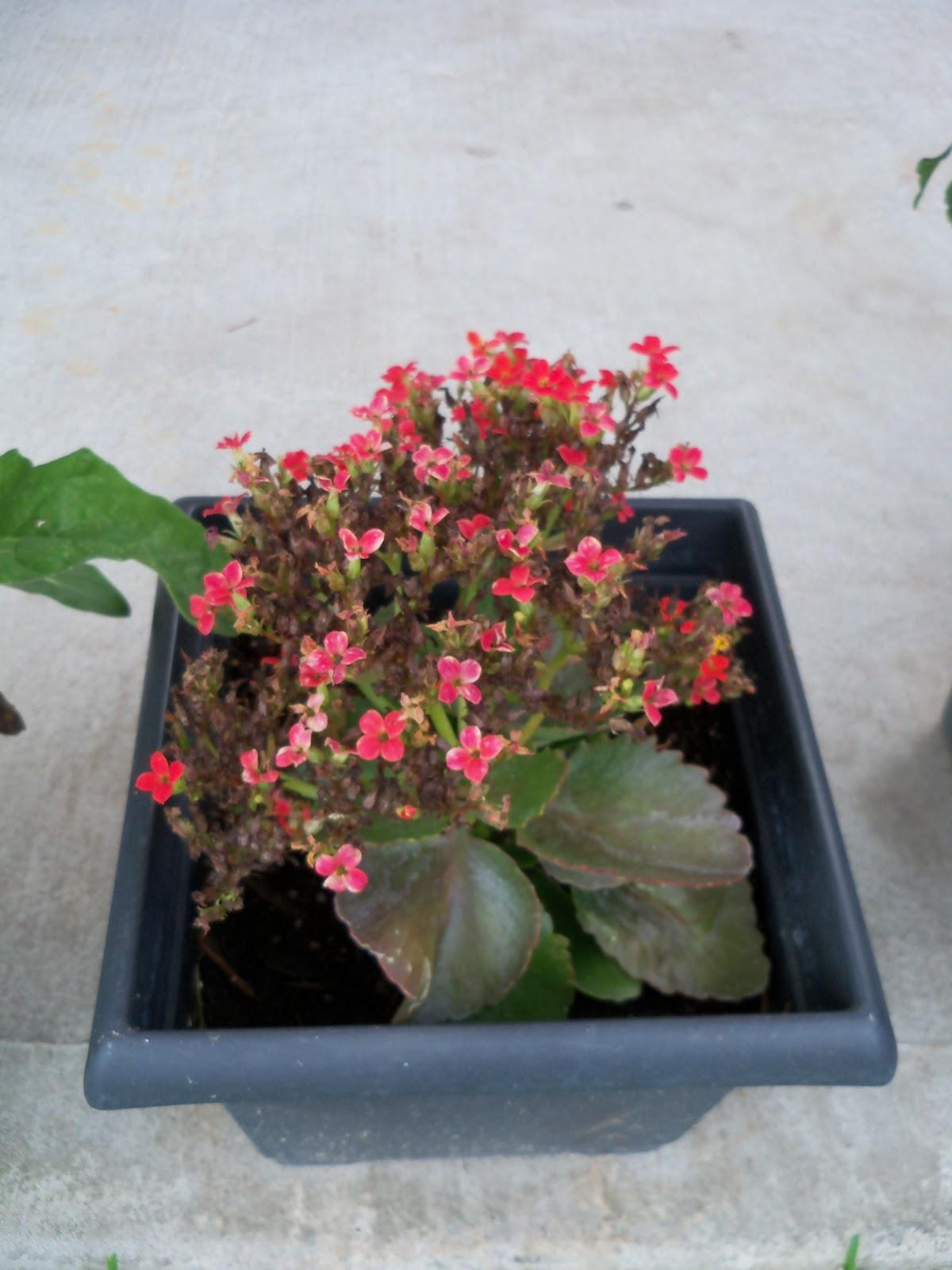 Gardening 2010, Part Two - 101_2812.JPG