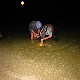 Project Limulus 2011 - Amy_Hopkins7.JPG