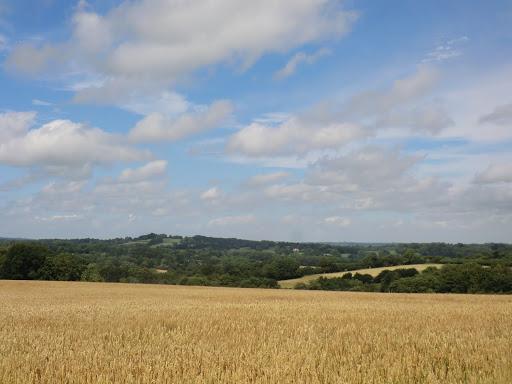 CIMG5846 Wheat field above Cowden