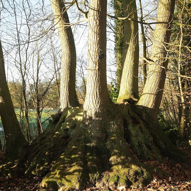 Stowe_Trees_02.JPG