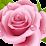 Kaye Swain REALTOR® - Keller Williams Roseville CA's profile photo