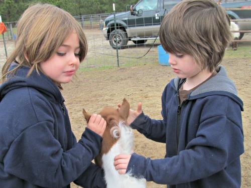Grace & Gwen handle Chylly's ears