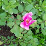 Gardening 2010 - 101_1239.JPG