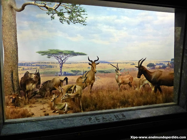 mamiferos-museo-historia-natural-nueva-york.JPG