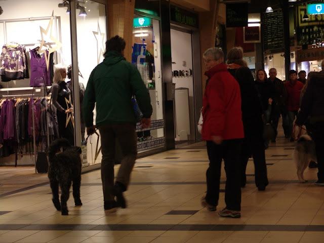 KNON puppys in de stad nov 2008 - DSC09028.JPG