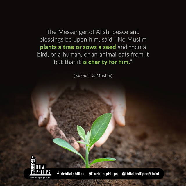 Even planting a tree is charity (Hadith)
