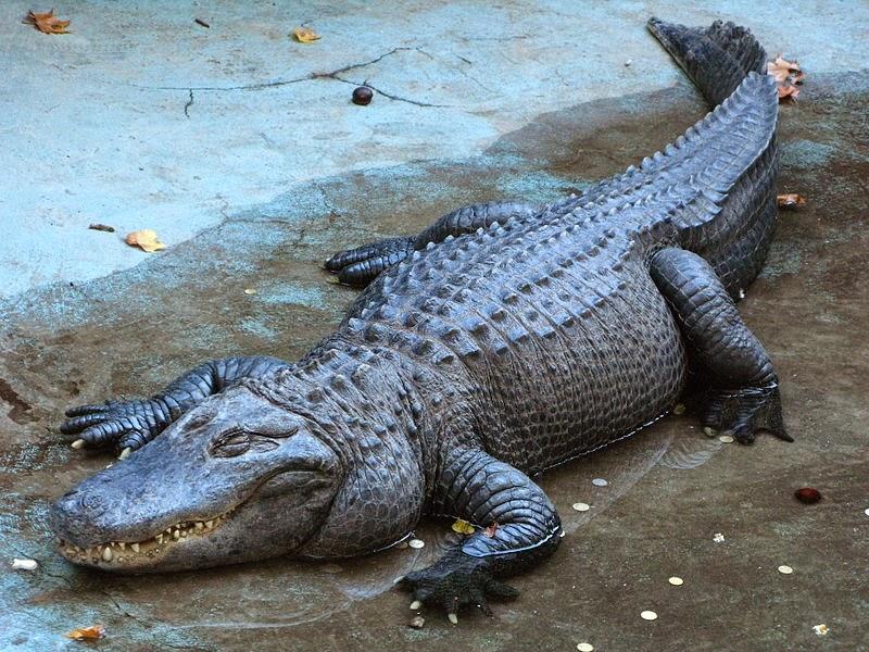 krokodil_1.0_a.jpg