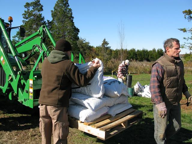 Hammo Planting - Shannon Schiesser - IMG_4942.JPG