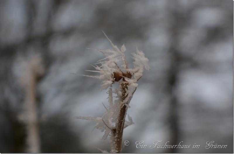Raureif macht das Wintermärchen perfekt.