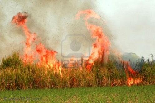 Ecosistemas tropicales impacto ambiental producido por for En cuanto tiempo se cosecha la tilapia