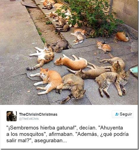 humor twits de gatos (2)