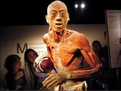 "Exposición ""Body Worlds"""