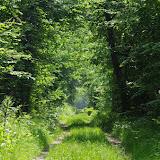 L'allée forestière, le 24 mai 2012. Les Hautes-Lisières (Rouvres, 28). Photo : J.-M. Gayman