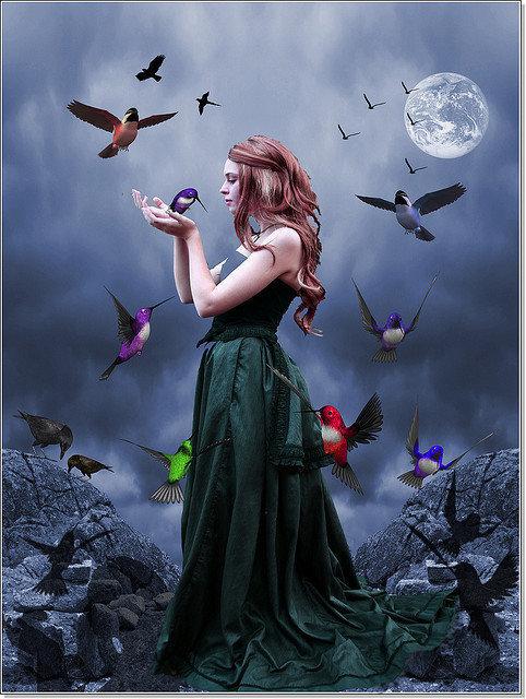 Night Magic Birds, Night Magic