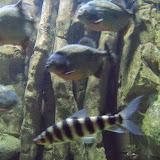 Downtown Aquarium - 116_3878.JPG