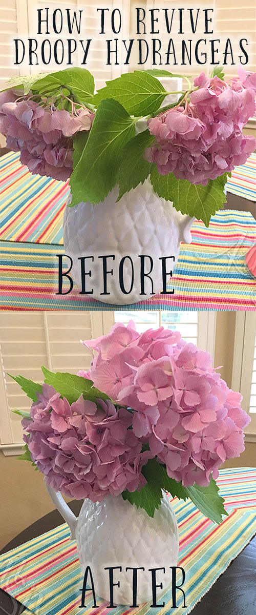 The trick on how to revive cut hydrangea flowers if they start drooping.  It isn't too late to save those wilted mophead flowers! This is the secret!