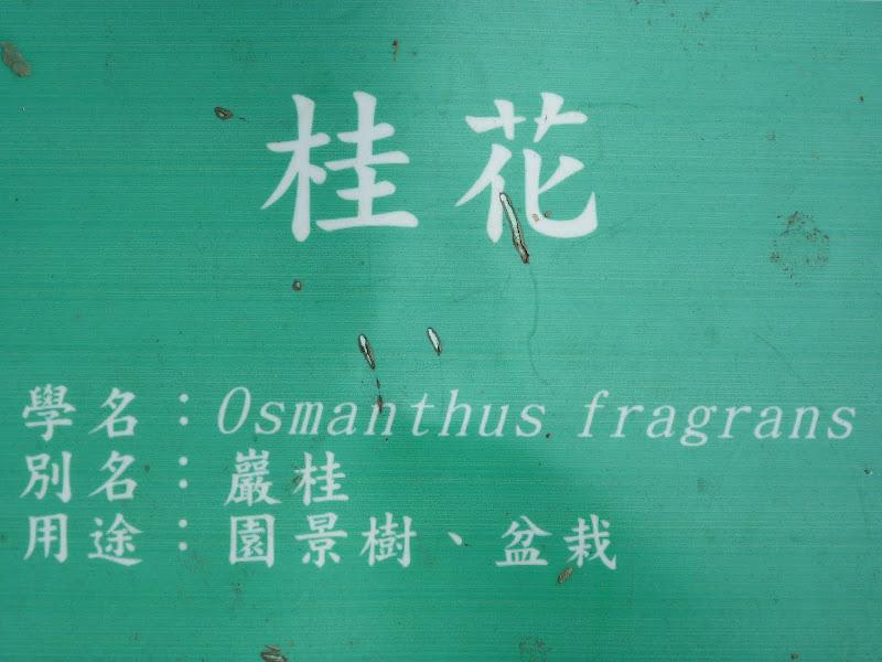TAIWAN Chia yi, Taichung et quelque part ? au  au sud de Taipei - P1000088.JPG