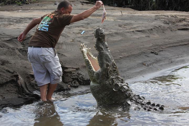Questões e Fatos sobre Crocodilianos gigantes: Transferência de debate da comunidade Conflitos Selvagens.  - Página 2 Croc-tour