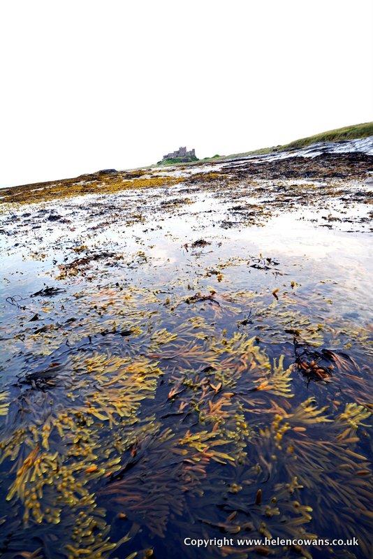 4 Bamburgh and seaweed copy