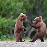 sweet-animals.jpg
