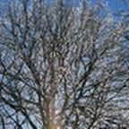 tn_lachaux-2010-12-47.jpg