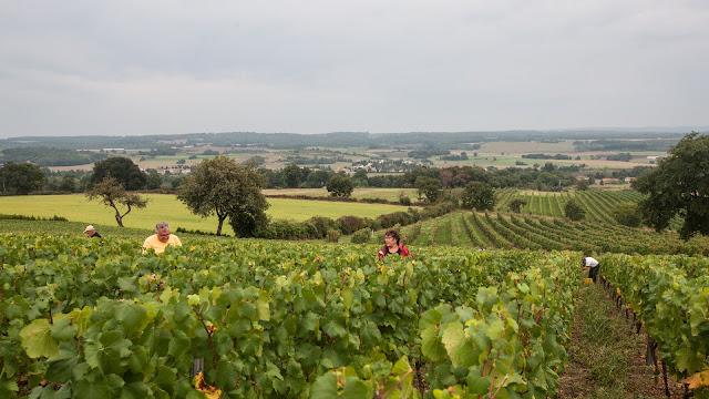 2013 vendanges du chardonnay - 2013%2B09%2B28%2BGuimbelot%2Bvendanges%2Bdu%2BChardonnay%2B117.jpg