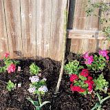 Gardening 2011 - 100_6855.JPG