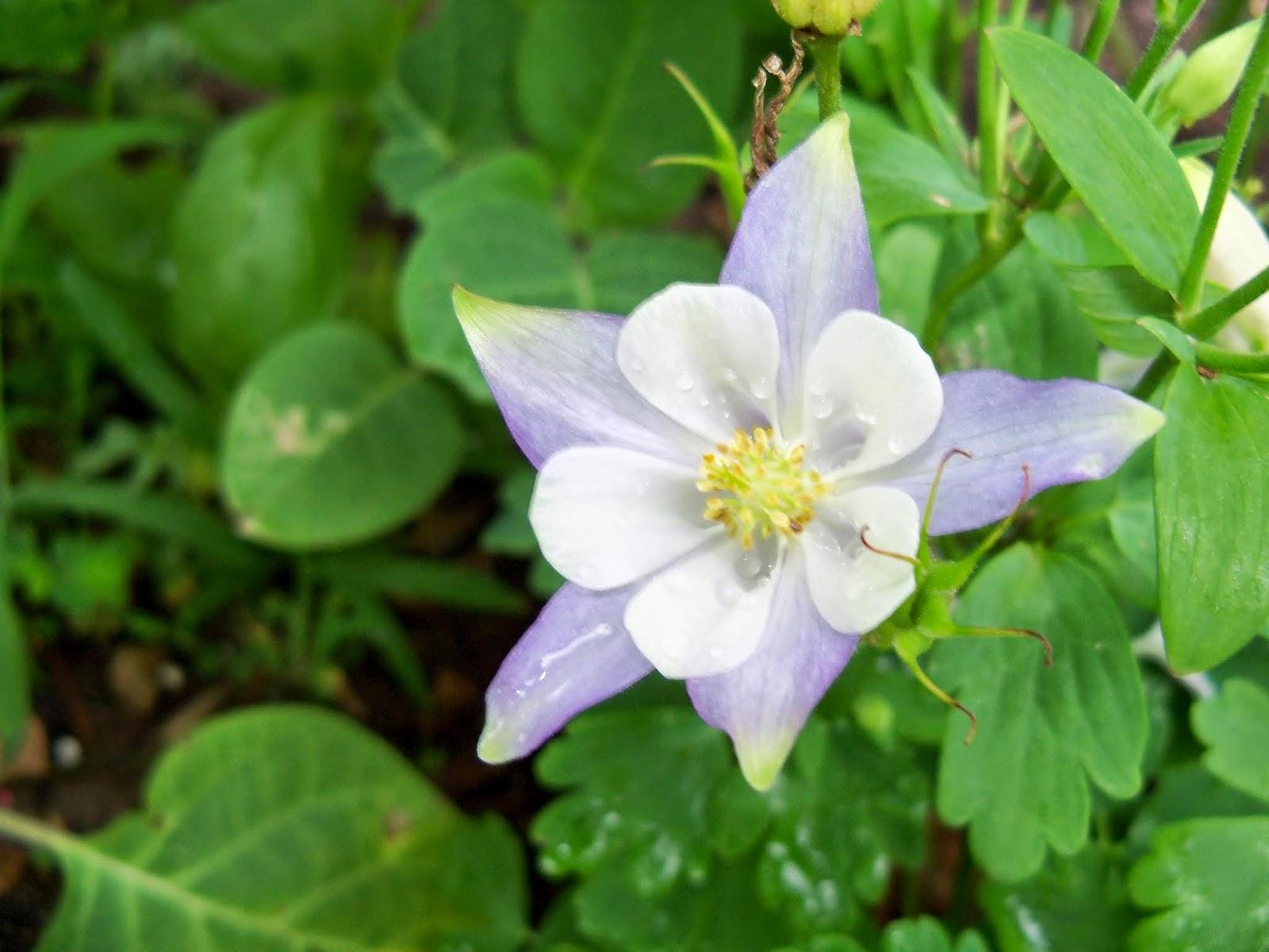 Gardening 2014 - 116_1844.JPG