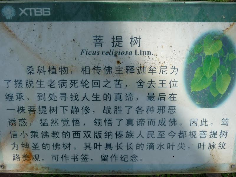 Chine .Yunnan . Lac au sud de Kunming ,Jinghong xishangbanna,+ grand jardin botanique, de Chine +j - Picture1%2B556.jpg