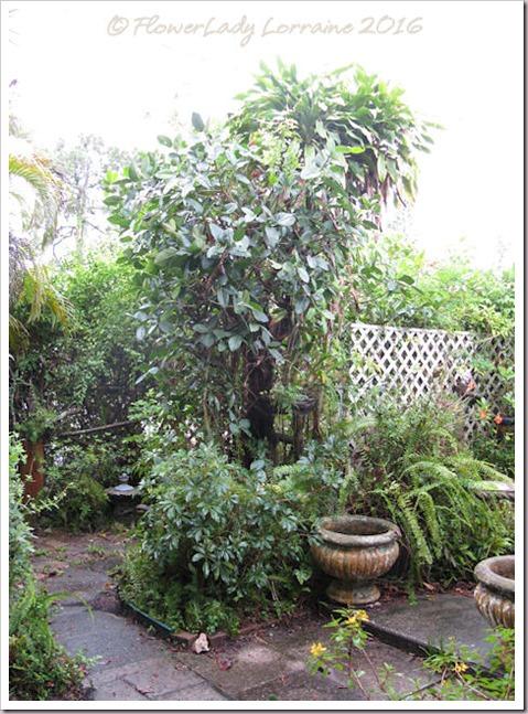 06-09-jungle2