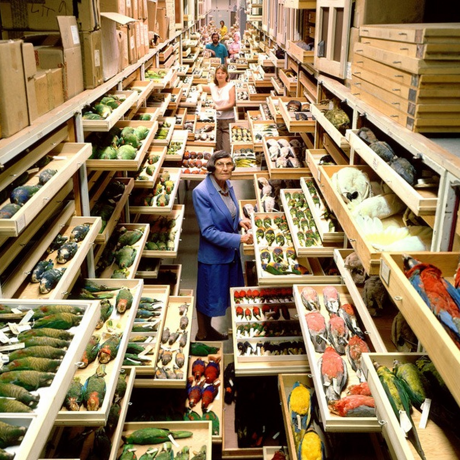 The Backroom Collection of The National Museum of Natural History
