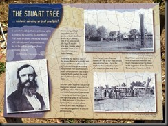170606 006 Daly Waters Stuart Tree