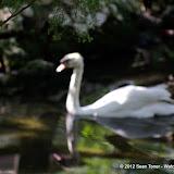 04-07-12 Homosassa Springs State Park - IMGP4564.JPG
