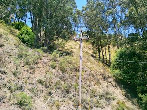 Photo: Fallen eucalyptus behind the pole.