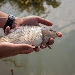 20150719_Fishing_Oleksandriya_027.jpg