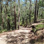 Walking along the wide trail (236159)