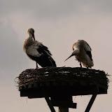 Vogels en dieren - IMG_5851.JPG