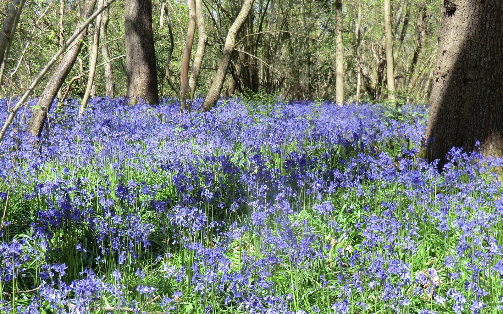 CIMG4194 Selsdon Wood