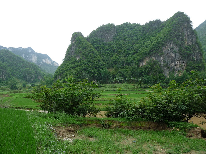 Chine . Yunnan BA MEI 2 - P1260913.JPG