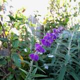 Gardening 2013 - 115_5451.JPG