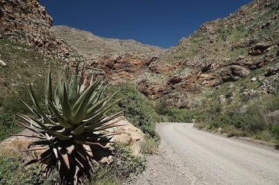 Aloe-Pflanze und Felsschichten in der Seweweekspoort