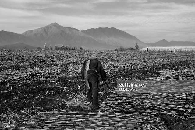 https://www.gettyimages.com.mx/detail/fotograf%C3%ADa-de-noticias/man-working-at-a-sugarcane-plot-in-ahualulco-fotograf%C3%ADa-de-noticias/170477728?adppopup=true