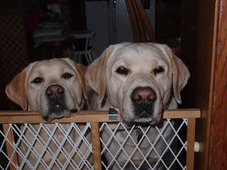 Peeking over the gate...Brinkley and Kramer.