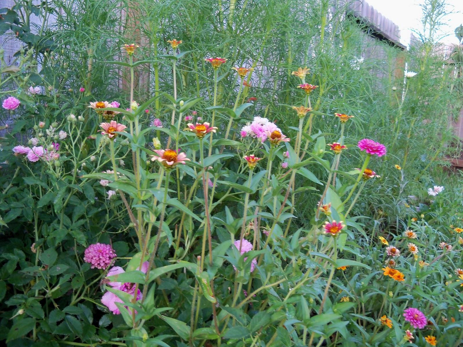 Gardening 2010, Part Three - 101_3973.JPG