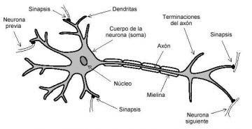 multiple sclerosis definition