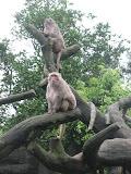 Monkeys at the Taipei Zoo